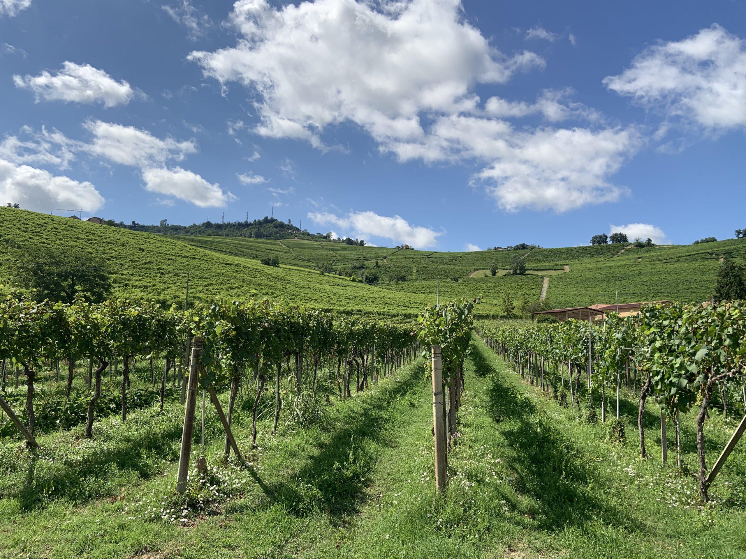 Rad efter rad av vinstockar i ett oändligt vackert landskap - Barolo