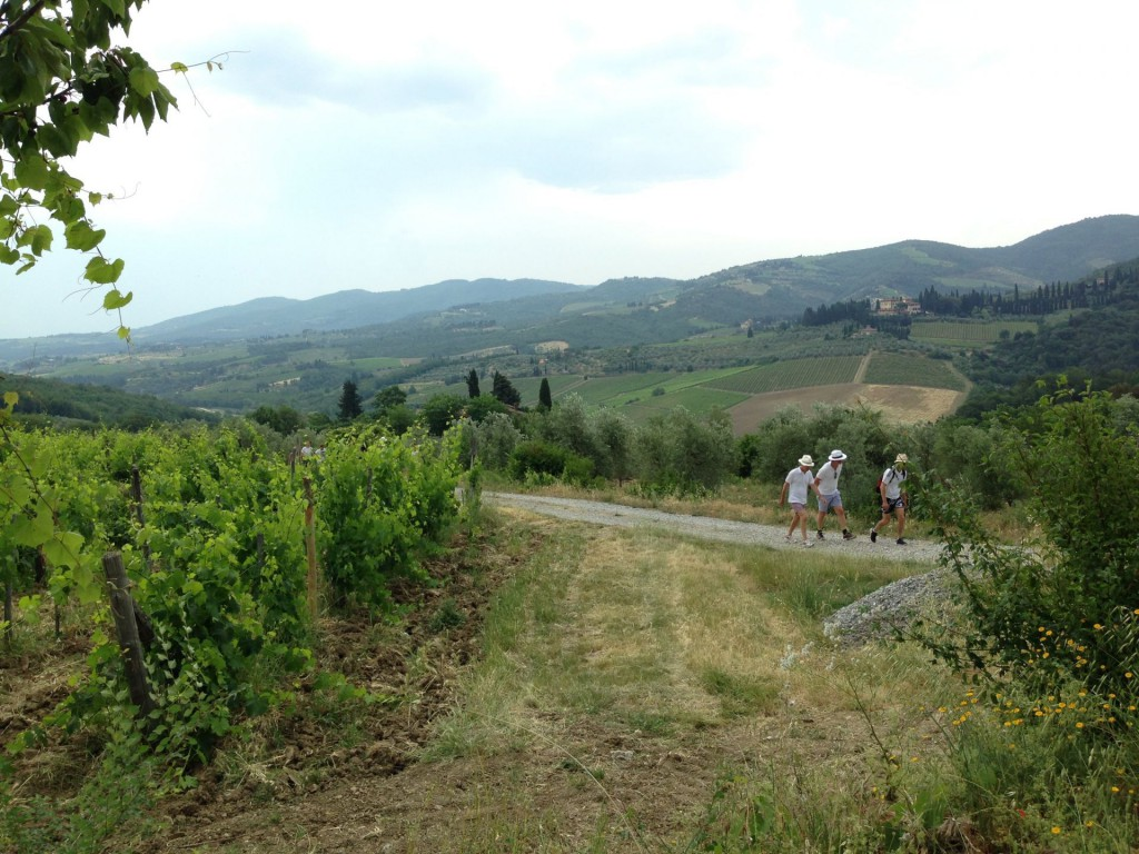 vinvandring Vignamaggio 16