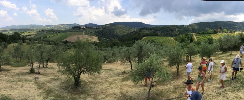 vinvandring Vignamaggio 2