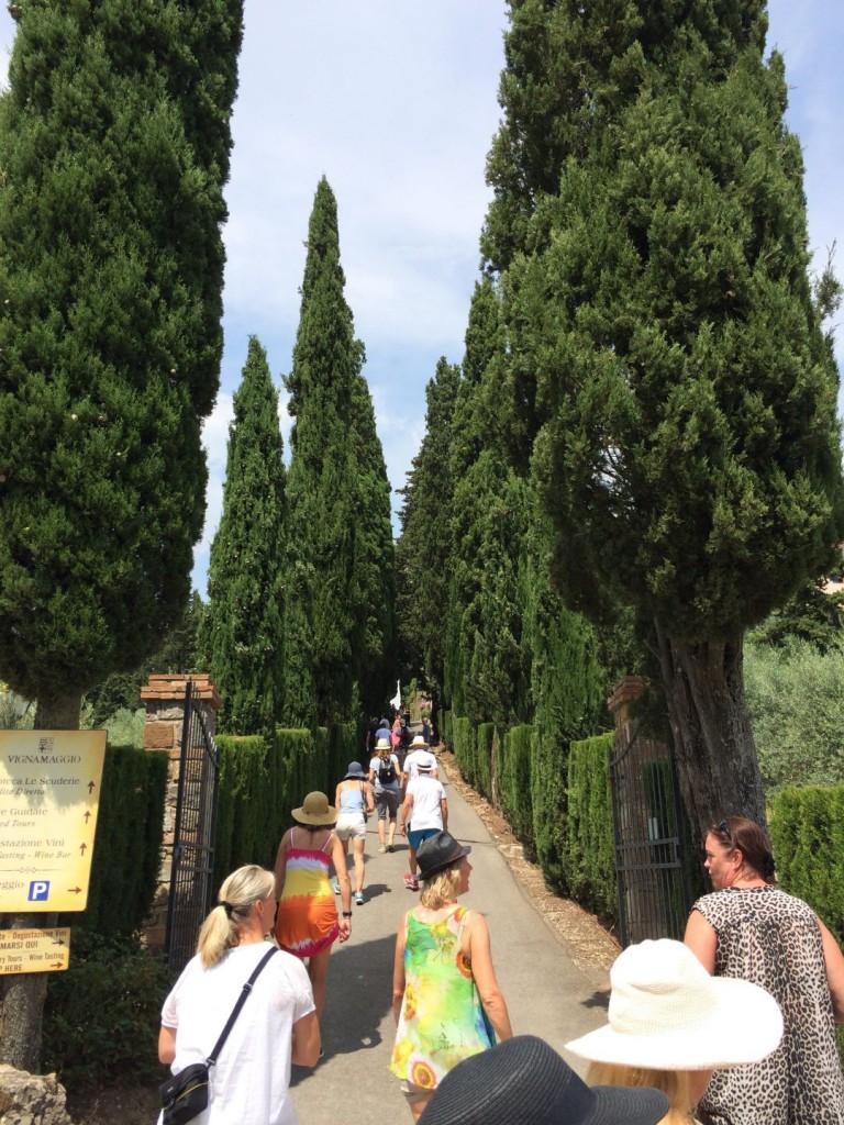 vinvandring Vignamaggio 8